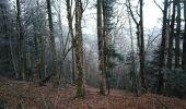 Randonnée Marche DOLLEREN - Vosges Dolleren - Rouge Gazon - Lac du Grand Neuweiher - Photo 3