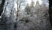 Randonnée Marche DOLLEREN - Vosges Dolleren - Rouge Gazon - Lac du Grand Neuweiher - Photo 2