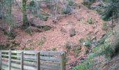 Trail Walk SAINT-MAURICE-SUR-MOSELLE - Sapin le roi soleil et cascade de l'ours  - Photo 4