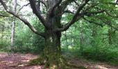 Trail Walk Theux - SPA - Bois du Staneu - Clémentine - Photo 2