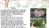 Trail Other activity MULHOUSE - Grand Est - Ligne 4 - Paris Mulhouse (section de :Montreux-Vieux à Mulhouse) - Photo 17