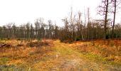 Trail Walk DAMPLEUX - en forêt de Retz_80_sur la Route Tortue et la Route Droite - Photo 45