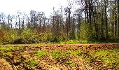 Trail Walk DAMPLEUX - en forêt de Retz_80_sur la Route Tortue et la Route Droite - Photo 132