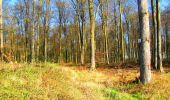 Trail Walk DAMPLEUX - en forêt de Retz_80_sur la Route Tortue et la Route Droite - Photo 152