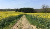 Trail Walk Assesse - Balade à Sorinne-la-Longue - Photo 1