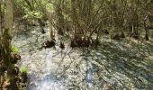 Trail Walk NOISY-SUR-ECOLE - pso-170429 - RECO Coulisses3pi - Photo 3