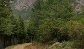 Randonnée Marche QUENZA - chemin corse - Photo 5