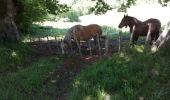 Trail Other activity SAINT-ETIENNE-DE-BAIGORRY - TDP N°5 ST ÉTIENNE DE BAIGORRY ST JEAN PIEDS DE PORT - Photo 2