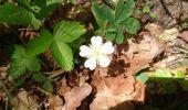 Trail Walk NOISY-SUR-ECOLE - pso-170516 - RECO Coulisses3pi - Photo 3
