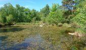 Trail Walk NOISY-SUR-ECOLE - pso-170516 - RECO Coulisses3pi - Photo 4