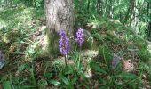 Trail Walk Tellin - Balade à Resteigne - Photo 3