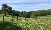 Trail Walk Tellin - Balade à Resteigne - Photo 4