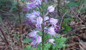Trail Walk NOISY-SUR-ECOLE - M&R-170520 - Coulisses3pignons - Photo 2