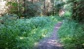 Trail Walk Tellin - BURE (Cambuses) - Photo 2