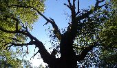 Trail Walk GROSROUVRE - _Chêne robuste et fleur de lys - Photo 2