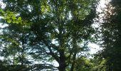 Trail Walk GAMBAISEUIL - _Entre forêt et clairières autour de Gambaiseuil - Photo 5