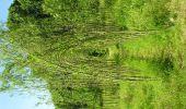 Randonnée Marche Gesves - Sentiers d'Art 2019 / Gesves-Ohey - Photo 24