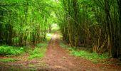 Randonnée Marche LA FERTE-MILON - en forêt de Retz_55_le bois de Borny - Photo 18