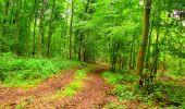Randonnée Marche LA FERTE-MILON - en forêt de Retz_55_le bois de Borny - Photo 21
