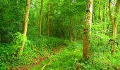 Randonnée Marche LA FERTE-MILON - en forêt de Retz_55_le bois de Borny - Photo 12