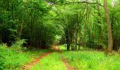 Randonnée Marche LA FERTE-MILON - en forêt de Retz_55_le bois de Borny - Photo 16