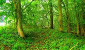 Randonnée Marche LA FERTE-MILON - en forêt de Retz_55_le bois de Borny - Photo 11