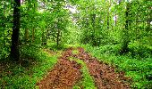 Randonnée Marche LA FERTE-MILON - en forêt de Retz_55_le bois de Borny - Photo 20