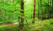 Randonnée Marche LA FERTE-MILON - en forêt de Retz_55_le bois de Borny - Photo 14