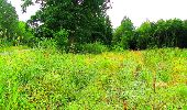 Randonnée Marche LA FERTE-MILON - en forêt de Retz_55_le bois de Borny - Photo 51