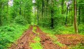 Randonnée Marche LA FERTE-MILON - en forêt de Retz_55_le bois de Borny - Photo 22