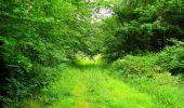 Randonnée Marche LA FERTE-MILON - en forêt de Retz_55_le bois de Borny - Photo 48