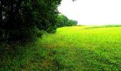 Randonnée Marche LA FERTE-MILON - en forêt de Retz_55_le bois de Borny - Photo 8