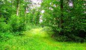 Randonnée Marche LA FERTE-MILON - en forêt de Retz_55_le bois de Borny - Photo 45