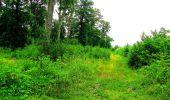 Randonnée Marche LA FERTE-MILON - en forêt de Retz_55_le bois de Borny - Photo 40