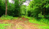 Randonnée Marche LA FERTE-MILON - en forêt de Retz_55_le bois de Borny - Photo 23