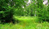 Randonnée Marche LA FERTE-MILON - en forêt de Retz_55_le bois de Borny - Photo 49