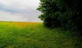 Randonnée Marche LA FERTE-MILON - en forêt de Retz_55_le bois de Borny - Photo 9