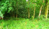 Randonnée Marche LA FERTE-MILON - en forêt de Retz_55_le bois de Borny - Photo 10