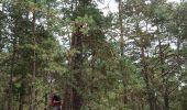 Trail Walk NEMOURS - pso-170726 - Nemours-Poligny - Photo 13