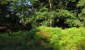Trail Walk LONGPONT - en forêt de Retz_56_Longpont_tour du Général Mangin_AR - Photo 155