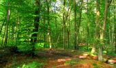Trail Walk LONGPONT - en forêt de Retz_56_Longpont_tour du Général Mangin_AR - Photo 120