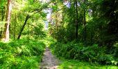Trail Walk LONGPONT - en forêt de Retz_56_Longpont_tour du Général Mangin_AR - Photo 19