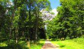 Trail Walk LONGPONT - en forêt de Retz_56_Longpont_tour du Général Mangin_AR - Photo 62