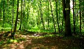 Trail Walk LONGPONT - en forêt de Retz_56_Longpont_tour du Général Mangin_AR - Photo 34