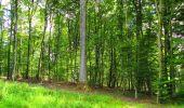Trail Walk LONGPONT - en forêt de Retz_56_Longpont_tour du Général Mangin_AR - Photo 63