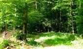 Trail Walk LONGPONT - en forêt de Retz_56_Longpont_tour du Général Mangin_AR - Photo 10