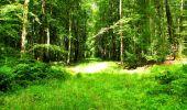 Trail Walk LONGPONT - en forêt de Retz_56_Longpont_tour du Général Mangin_AR - Photo 33