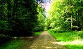 Trail Walk LONGPONT - en forêt de Retz_56_Longpont_tour du Général Mangin_AR - Photo 35