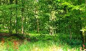Trail Walk LONGPONT - en forêt de Retz_56_Longpont_tour du Général Mangin_AR - Photo 107