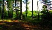 Trail Walk LONGPONT - en forêt de Retz_56_Longpont_tour du Général Mangin_AR - Photo 94